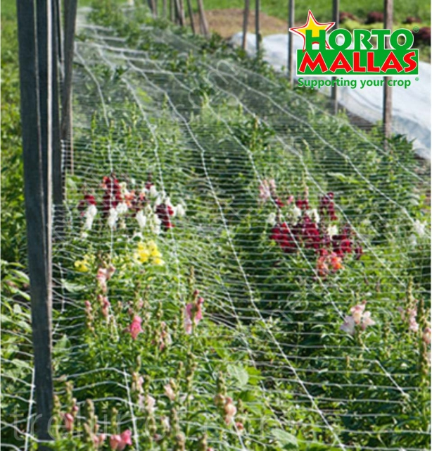 Flower production with horizontal trellis net support