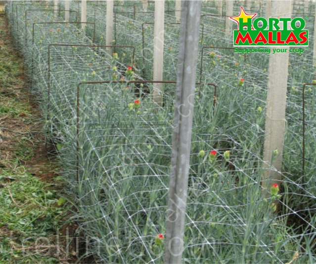 Ornamental fower production with trellis net support